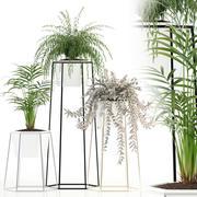 Plantencollectie 88 3d model