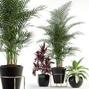 Plantencollectie 89 3d model