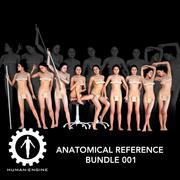 Анатомический справочный комплект 001 3d model