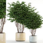 Plantencollectie 91 3d model