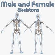 Männliche und weibliche Körper mit Skelettsammlung 3d model