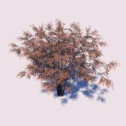 매자 나무 3d model