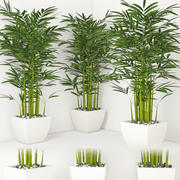 Houseplant 19 3d model