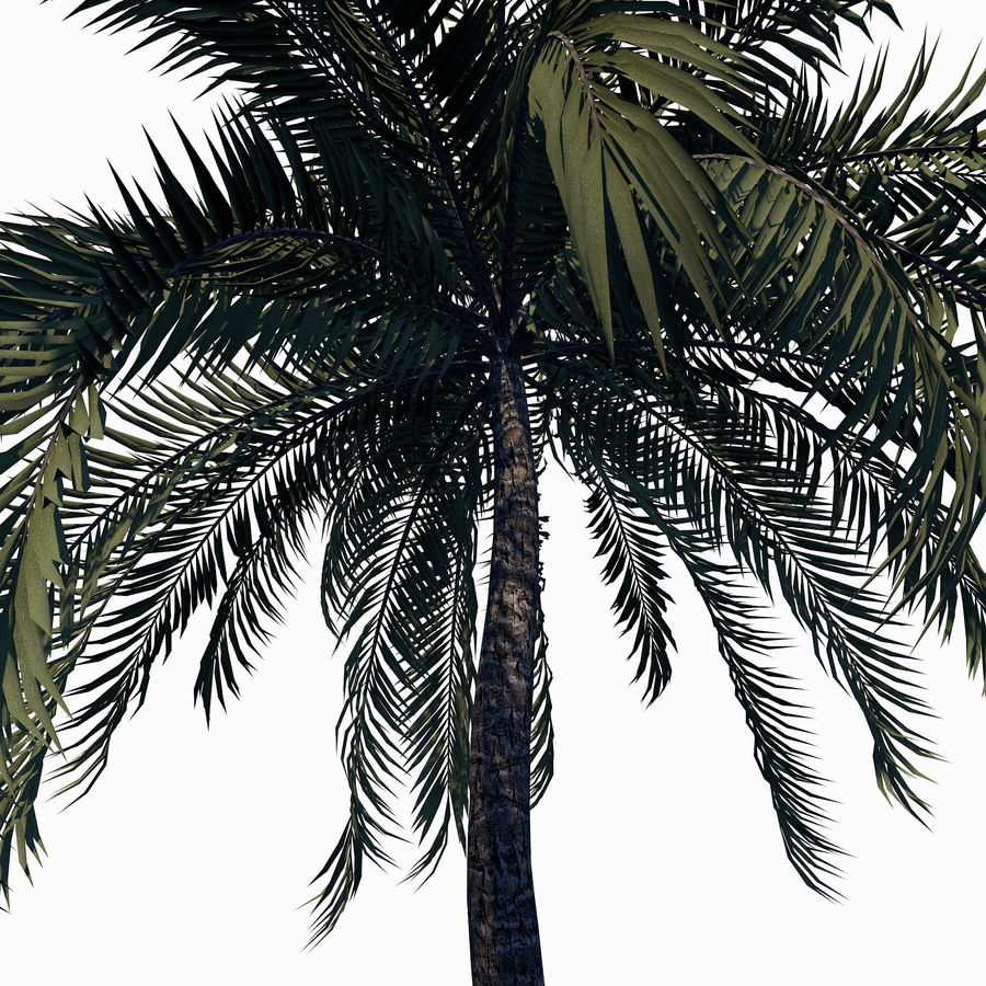 Beach Palm Tree royalty-free 3d model - Preview no. 5