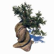 アカマツLongaevaツリー 3d model