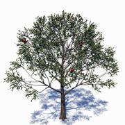 Elma ağacı 3d model