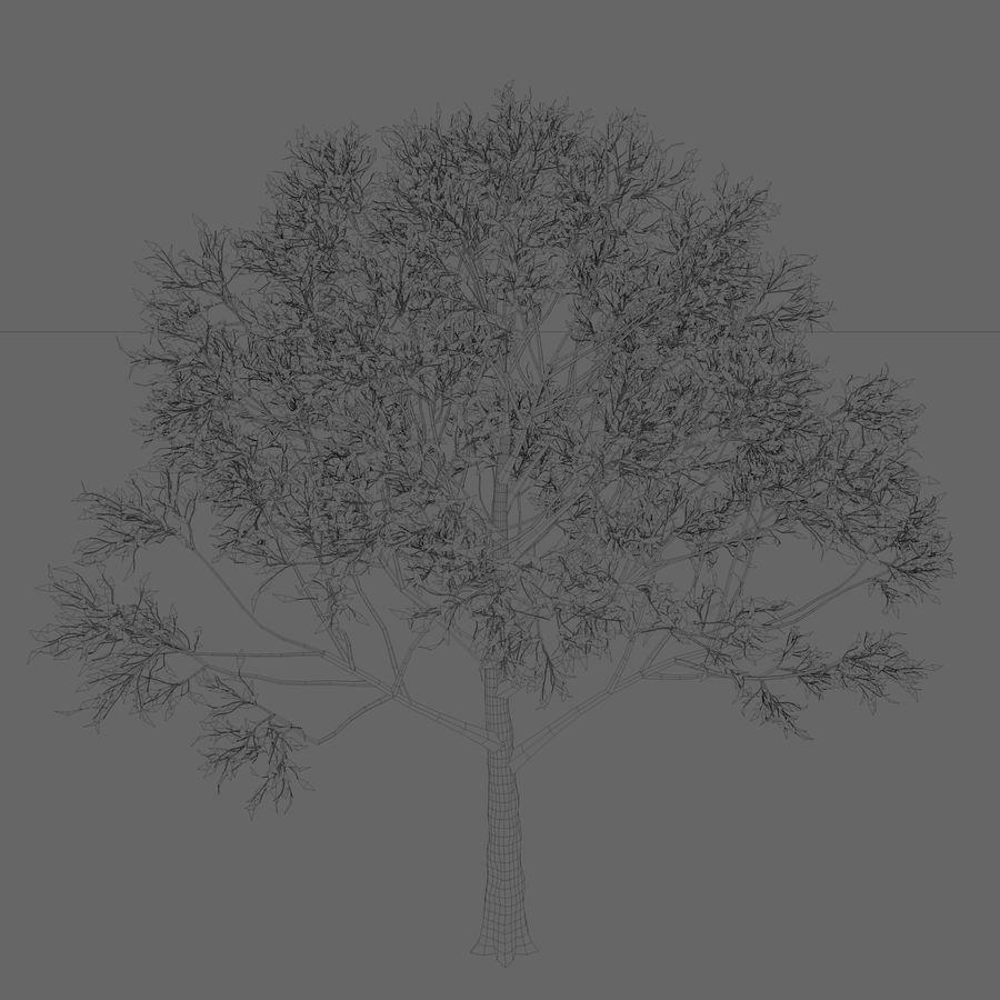 Jabłoń royalty-free 3d model - Preview no. 2