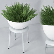 室内植物22 3d model