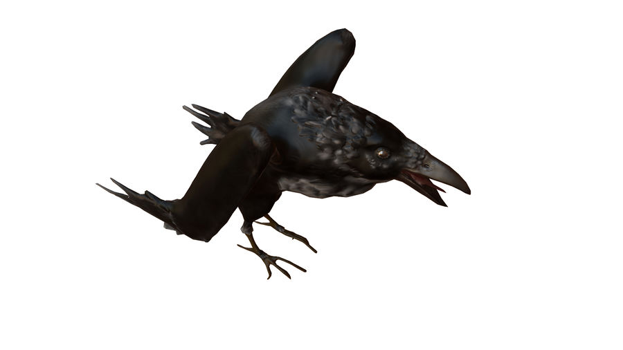Crow or Raven or Corbie royalty-free 3d model - Preview no. 4