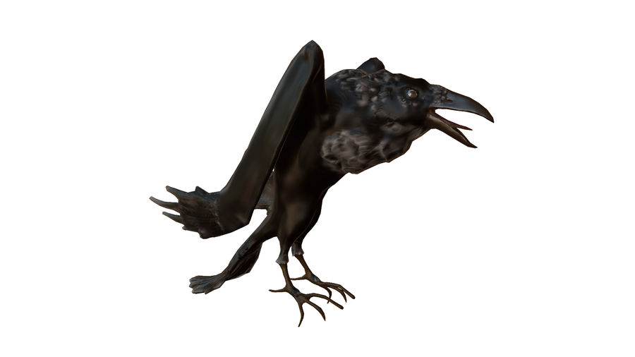 Crow or Raven or Corbie royalty-free 3d model - Preview no. 1