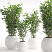観葉植物20 3d model