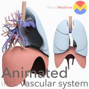 W pełni animowane płuca 3d model