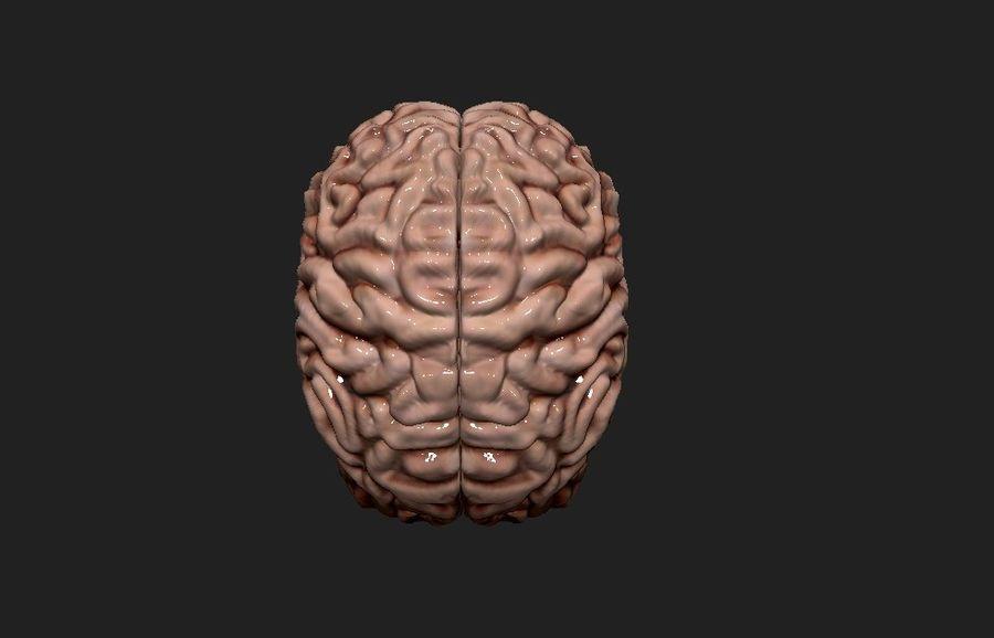 Mänsklig hjärna royalty-free 3d model - Preview no. 10
