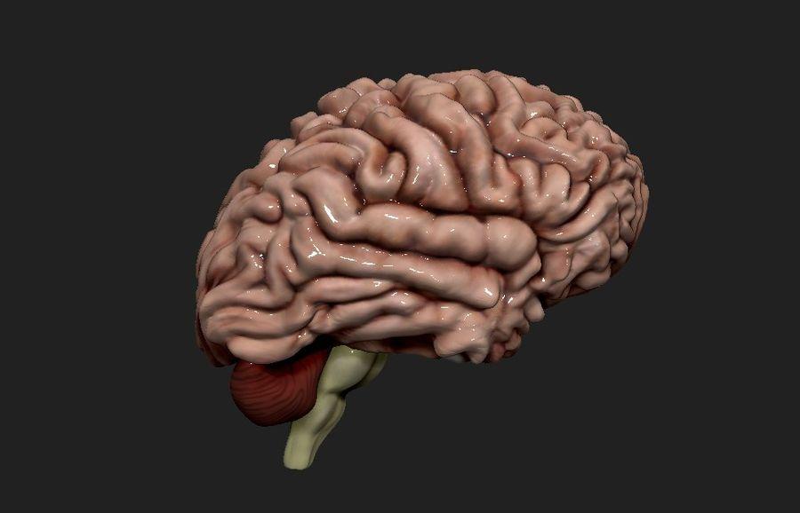 Mänsklig hjärna royalty-free 3d model - Preview no. 7