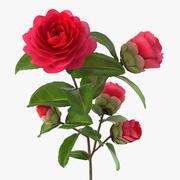 Садовый цветок Камелия Красный 3d model