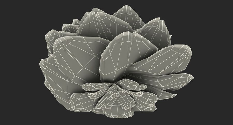 Evolução da flor do botão royalty-free 3d model - Preview no. 15