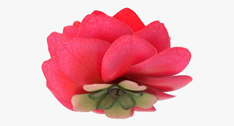 Bud Blossom Evolution royalty-free 3d model - Preview no. 5