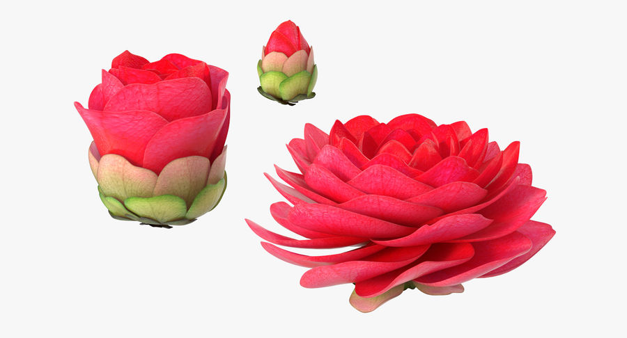 Evolução da flor do botão royalty-free 3d model - Preview no. 4