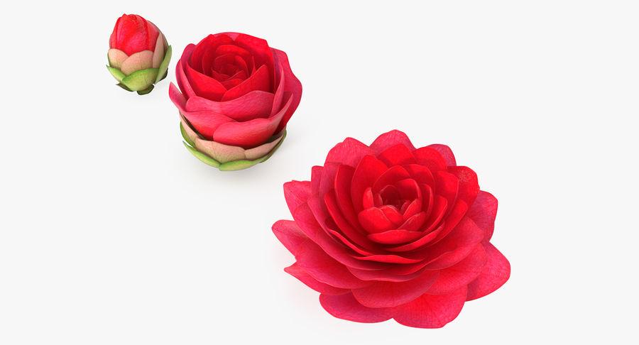 Bud Blossom Evolution royalty-free 3d model - Preview no. 2