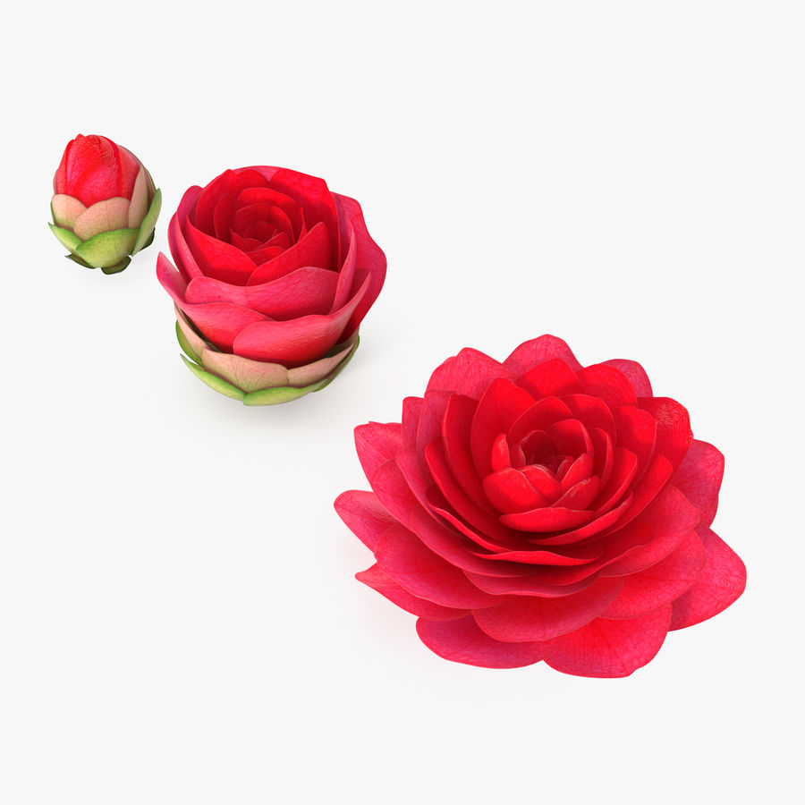 Bud Blossom Evolution royalty-free 3d model - Preview no. 1