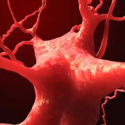树突神经元神经细胞 3d model