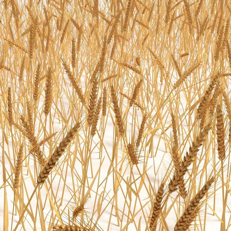 Buğday tarlası royalty-free 3d model - Preview no. 1