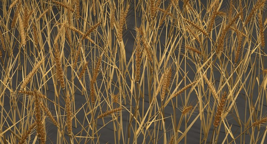 Buğday tarlası royalty-free 3d model - Preview no. 7