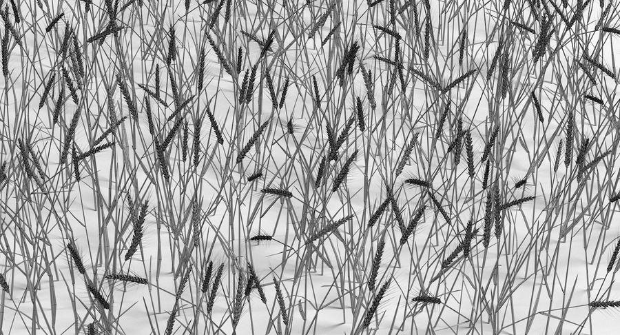 Buğday tarlası royalty-free 3d model - Preview no. 16