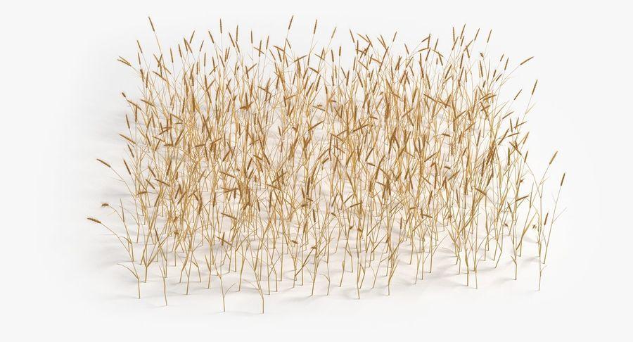 Buğday tarlası royalty-free 3d model - Preview no. 10