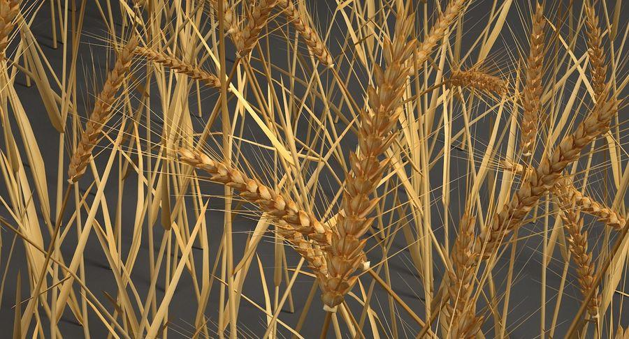 Buğday tarlası royalty-free 3d model - Preview no. 8