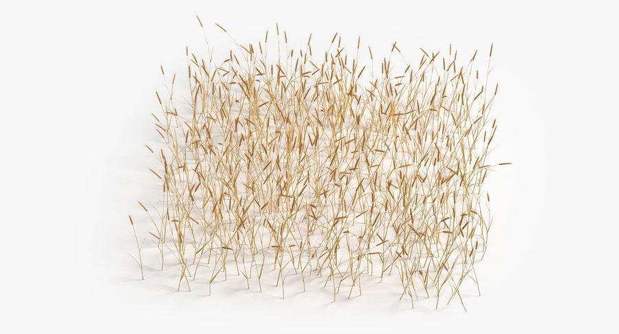 Buğday tarlası royalty-free 3d model - Preview no. 11