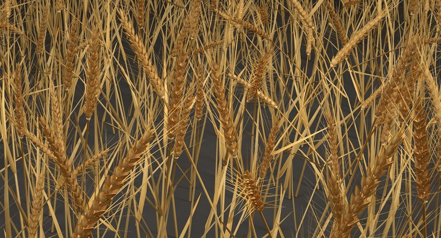 Buğday tarlası royalty-free 3d model - Preview no. 2