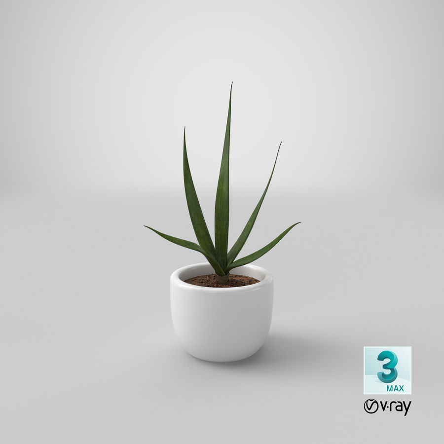 Decor Flower 03 royalty-free 3d model - Preview no. 22