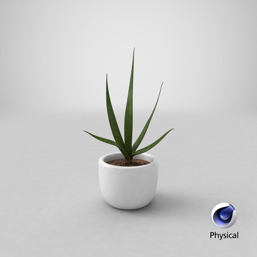 Decor Flower 03 royalty-free 3d model - Preview no. 24