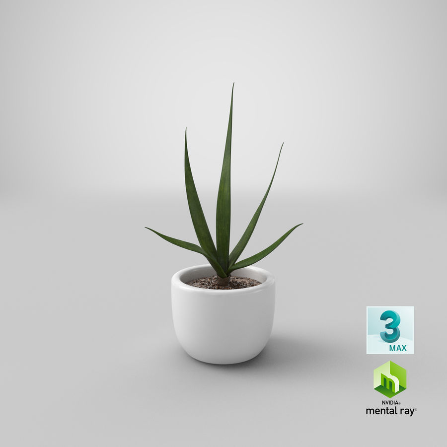 Decor Flower 03 royalty-free 3d model - Preview no. 23