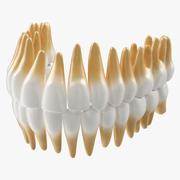 Model medyczny 3D zębów 3d model