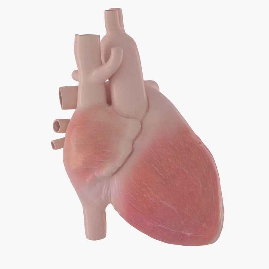 Human Heart Rigged Animated royalty-free 3d model - Preview no. 13