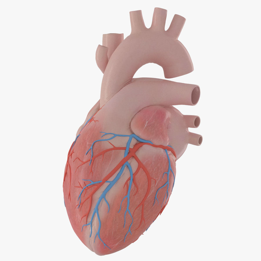 Human Heart Rigged Animated royalty-free 3d model - Preview no. 1