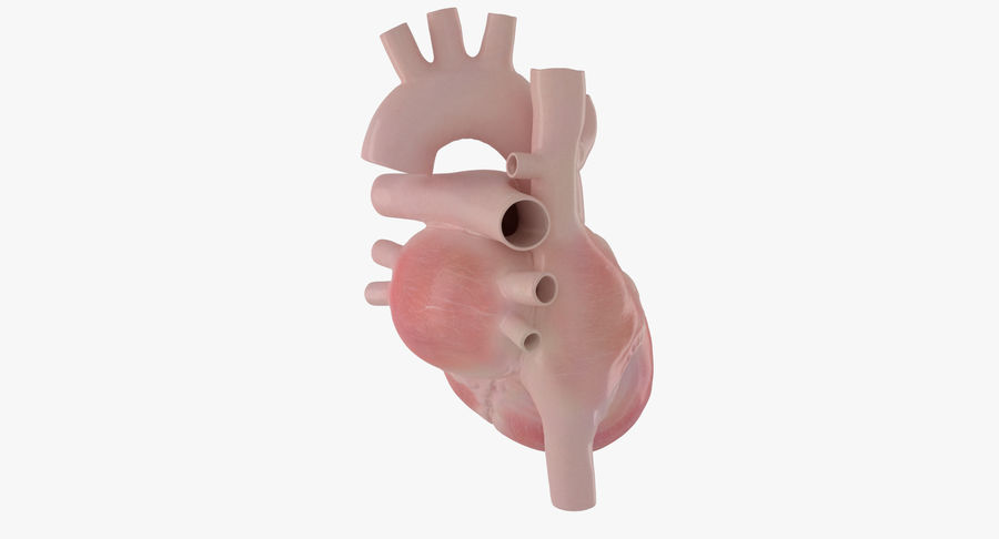 Human Heart Rigged Animated royalty-free 3d model - Preview no. 15