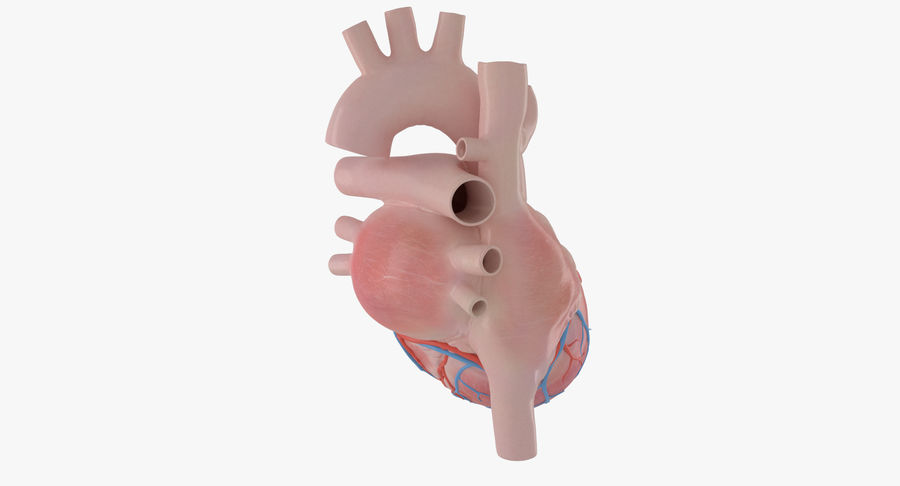 Human Heart Rigged Animated royalty-free 3d model - Preview no. 4