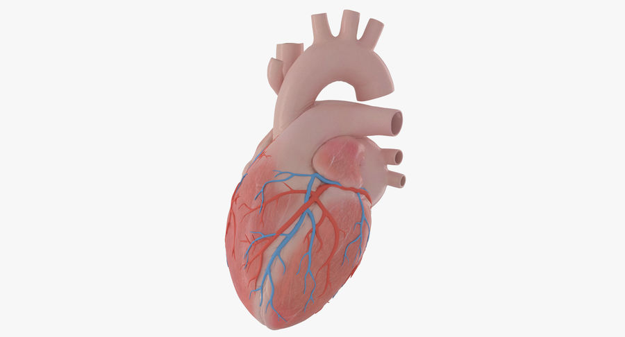 Human Heart Rigged Animated royalty-free 3d model - Preview no. 2