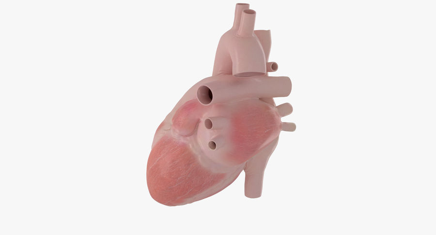 Human Heart Rigged Animated royalty-free 3d model - Preview no. 17