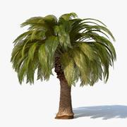 Palma 3d model