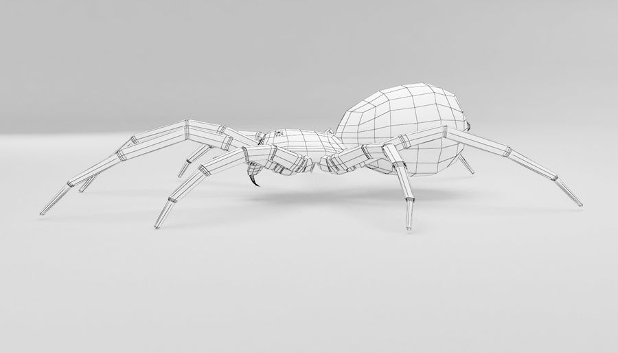 Wolf Spider royalty-free 3d model - Preview no. 17
