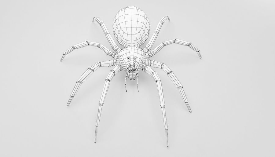 Wolf Spider royalty-free 3d model - Preview no. 19