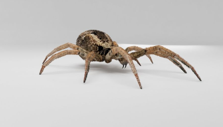 Wolf Spider royalty-free 3d model - Preview no. 8