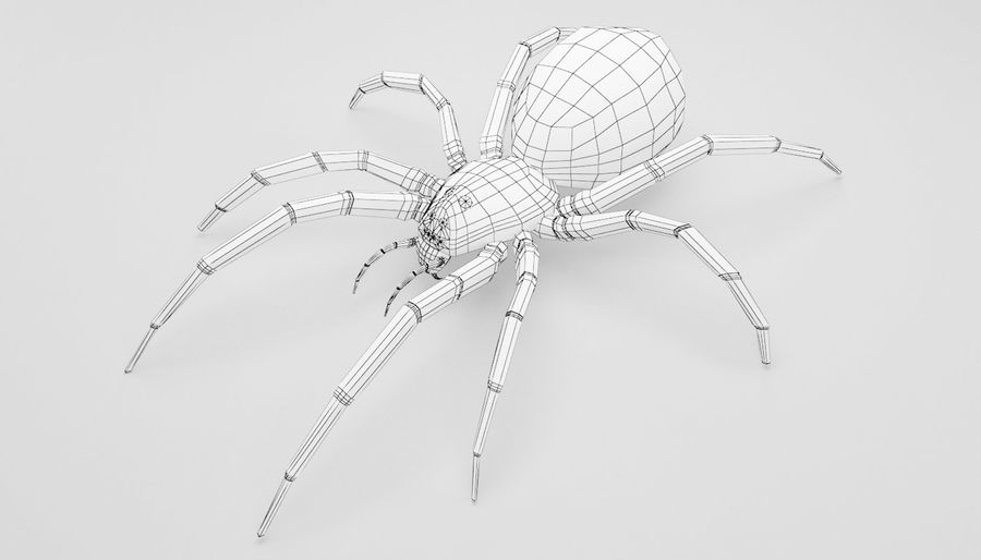 Wolf Spider royalty-free 3d model - Preview no. 18