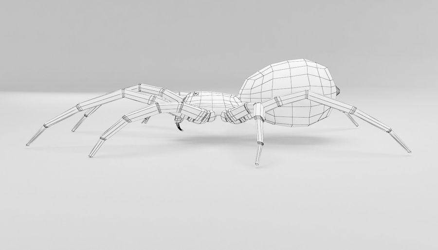 Wolf Spider royalty-free 3d model - Preview no. 11