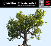 Acacia Tree Animated 3d model