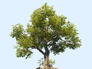 Дерево Анимированное 3d model